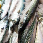 CLIVE BOZZARD-HILL PHOTOGRAPHY, LONDON-mackerel-fresh fish-