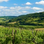 CLIVE BOZZARD-HILL PHOTOGRAPHY, LONDON-flavigny-flavigny sur ozerain-vineyard